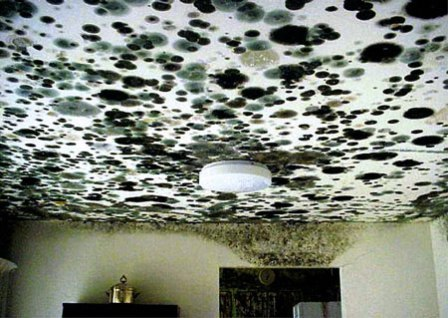 mold removal pittsburgh